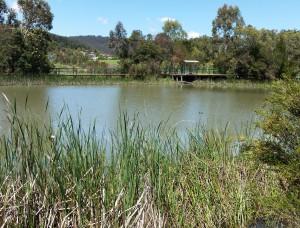 Farmers Creek - Lake Pillans wetlands - 20151107_113646 - cropped